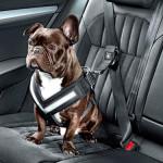 arnes perros, transportín, mascotas