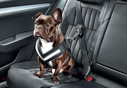 Cómo transportar mascotas en un vehículo