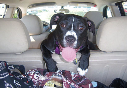 Consejos para transportar a tu perro en coche